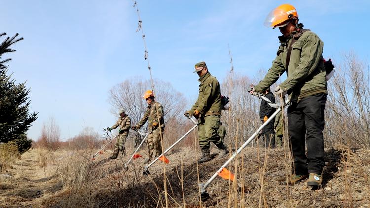 库都尔林业局开设防火隔离带除草专项行动有序进行