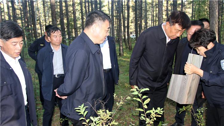 国家林草局驻内蒙古自治区森林资源监督专员李国臣到乌尔旗汉森工公司调研