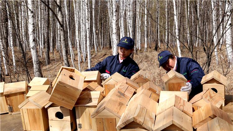莫尔道嘎林业局开展鸟巢箱制作悬挂工作