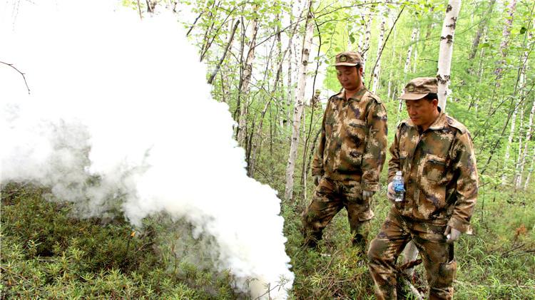 阿龙山林业局开展桦树黑斑病防治工作