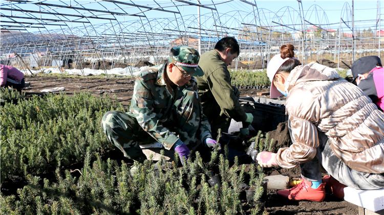 绰源林业局组织干部职工进行苗木装杯作业