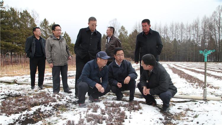 国家林草局督导组来到根河林业局督导调研