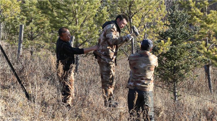 绰尔林业局开展保护绿化带行动