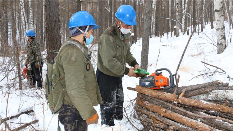 绰源林业局森林抚育进行时