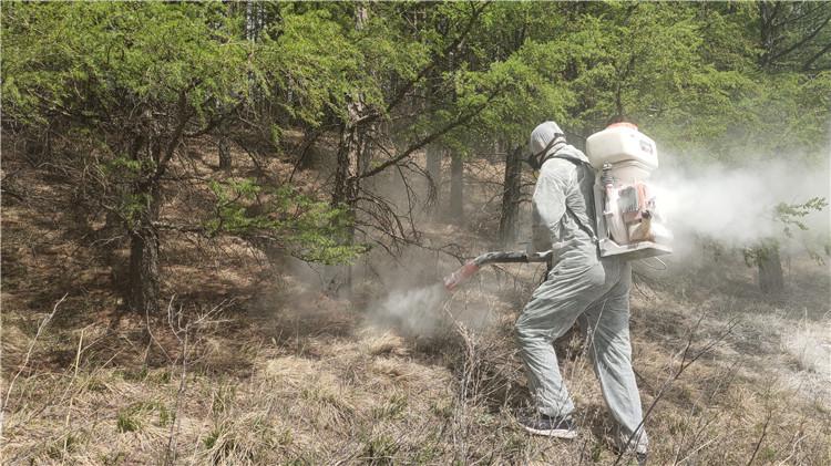 图里河林业局积极开展落叶松毛虫防治工作