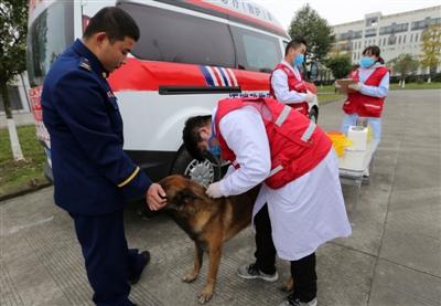 出诊费用500到1000元 宠物救护车来了!